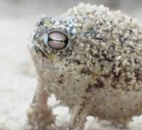 Der Frosch wird gerade zum Internetstar, Foto: Screenshot von www.youtube.de
