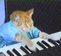 Die Keyboard-Katze ist eines der ältesten Internet-Meme, Foto: Screenshot von www.youtube.de