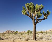 Im Südosten Kaliforniens: Der Joshua Tree National Park