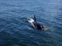 Whalewatching ist sehr beliebt in Neuseeland