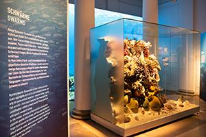 """Ein Spiel der HdM bereichert die Ausstellung """"RIESIG im Meer"""" im Naturkundemuseum Stuttgart"""